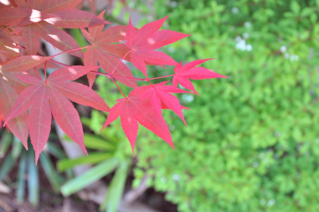 春だ!紅葉だ!(?)