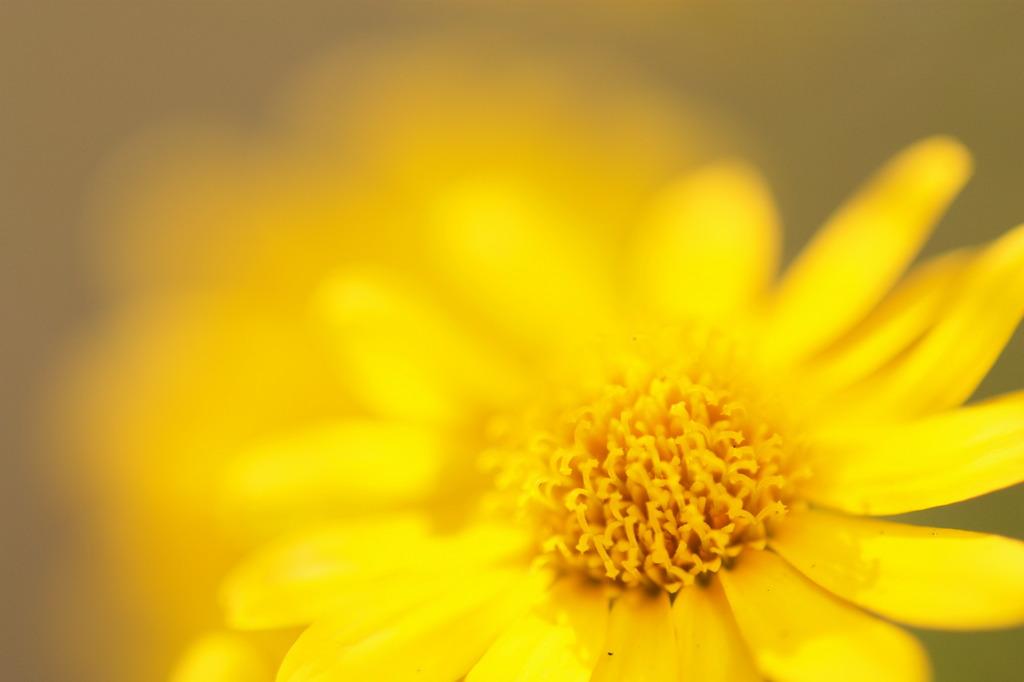 daisy 02