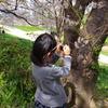 桜も緊張→汗