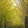 黄色のアーチ