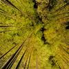 竹林10502