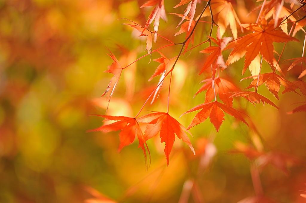 秋色に溺れそう