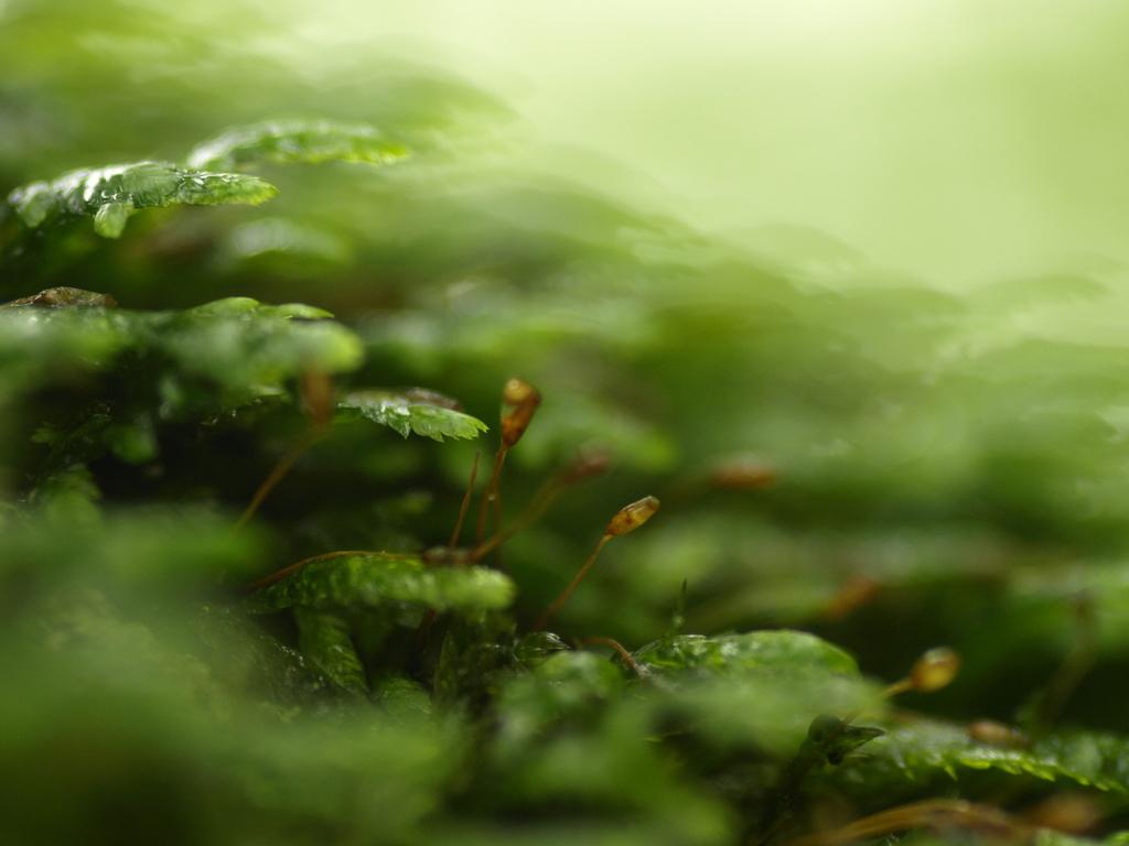 緑の波に溺れて