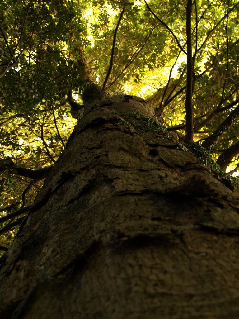 寄らば大樹の・・・