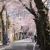 桜吹雪過ぎ!!