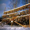 アイヌ村から/干し鮭つくり