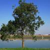 青空と川と一本の木