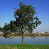 ファイトの木