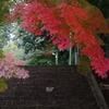 葉の色のうつり変わり