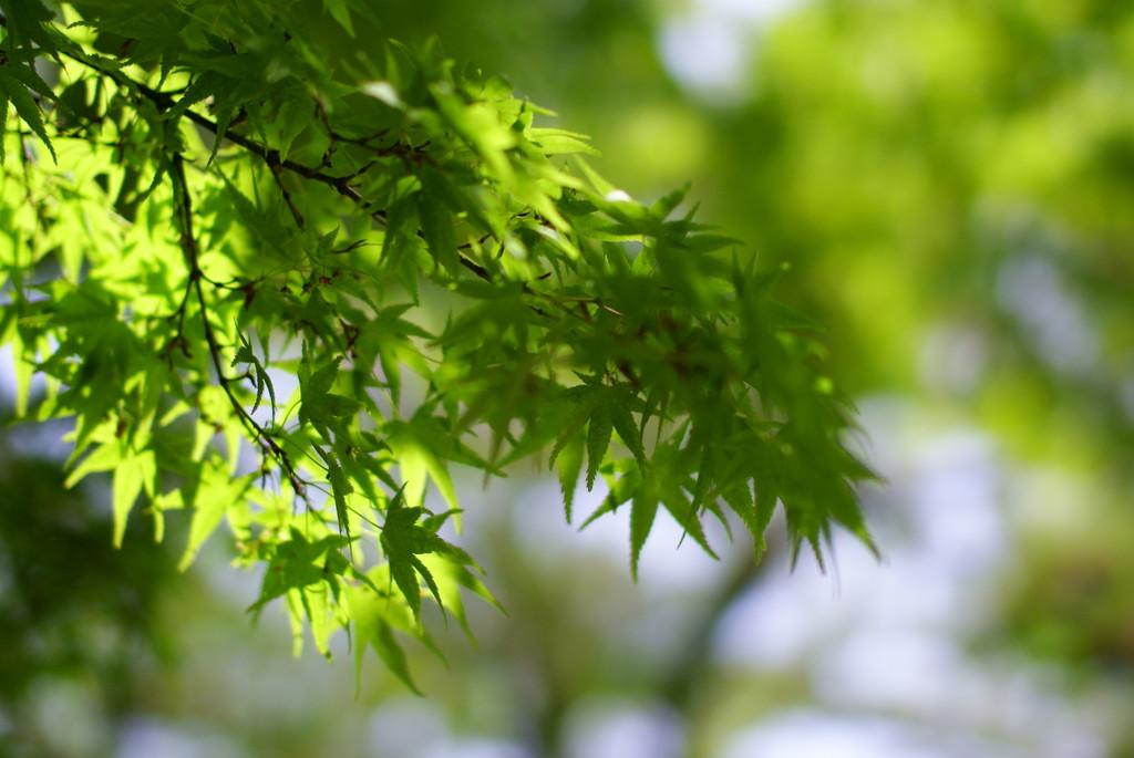 木陰から… 2