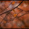 秋しぐれ、冷たい雨は涙かな。