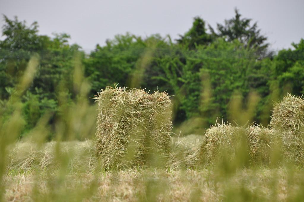 乾草その後