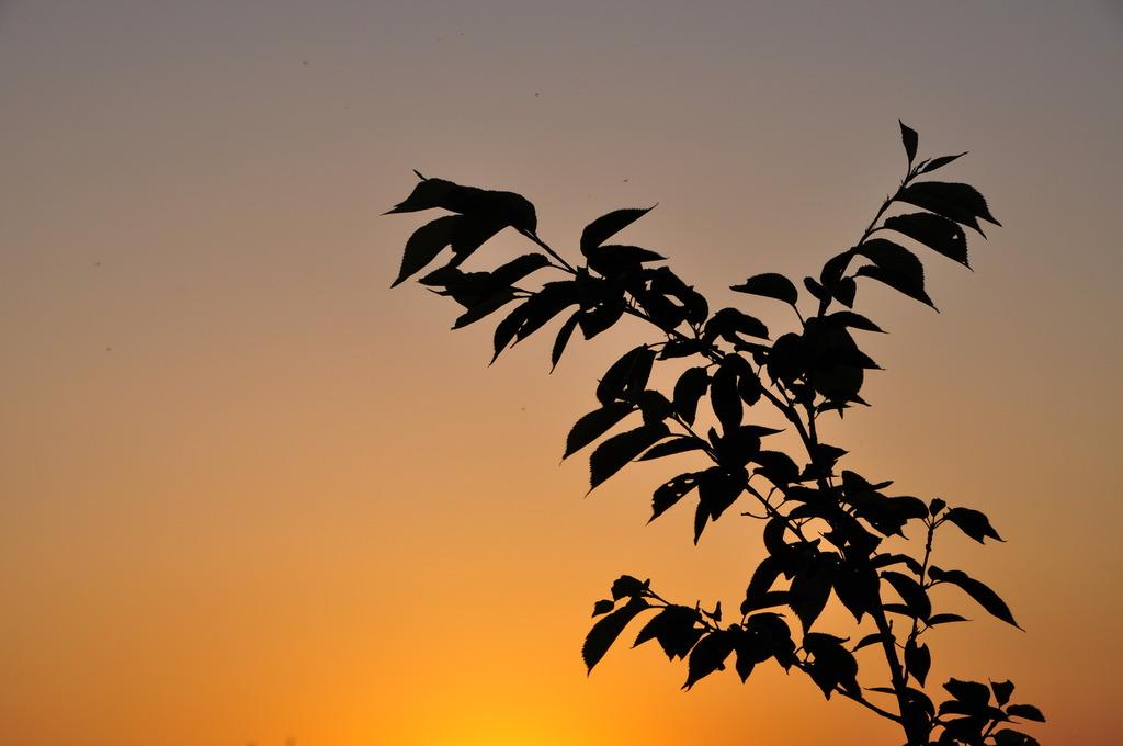 夕焼けに 見とれ微笑む 葉っぱかな