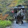 馬車in紅葉♪