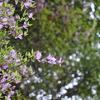 尾道~岩肌に咲く