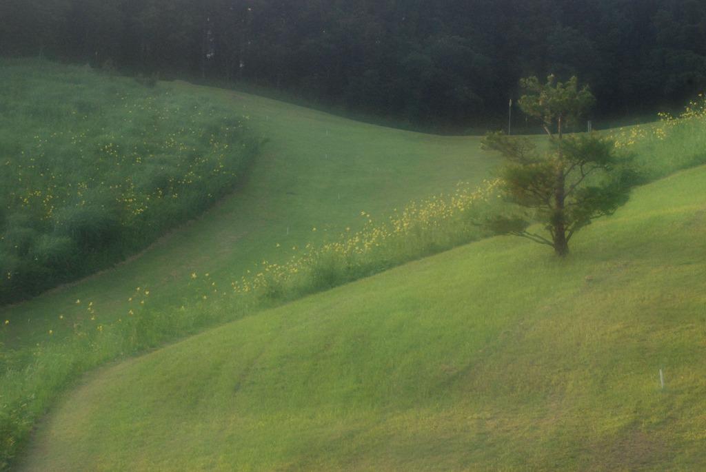 ゆうすげの丘