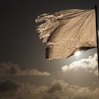 CANON Canon EOS 5D Mark IIIで撮影した(白旗)の写真(画像)