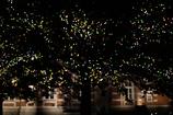 大きな光の木の下で