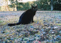 OLYMPUS OM-1で撮影した(黒猫ポートレート)の写真(画像)