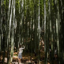 NIKON NIKON D810で撮影した(竹林のランウェイ)の写真(画像)