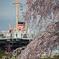 氷川丸と桜