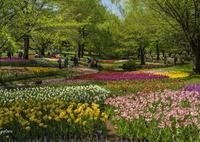 SONY ILCE-7M2で撮影した(公園の花壇にて)の写真(画像)