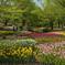 公園の花壇にて