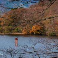 NIKON NIKON D7200で撮影した(箱根九頭龍の森(紅葉)2)の写真(画像)