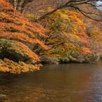 NIKON NIKON D7200で撮影した(箱根九頭龍の森(紅葉))の写真(画像)