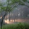 朝霧の中に、、、
