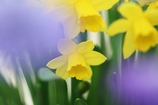 春を感じたくて(1)