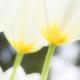 淡い春の季節