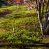 龍安寺 苔と落葉