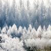 凍える光の森