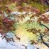 湖に映る虹色