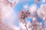 待ちわびた春色