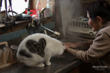 猫と暮らす