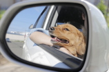 Drive with a dog