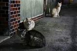 逞しく生きる野良猫たち