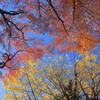 ビビッドな空に紅葉と黄葉