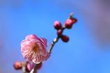 春、近づく