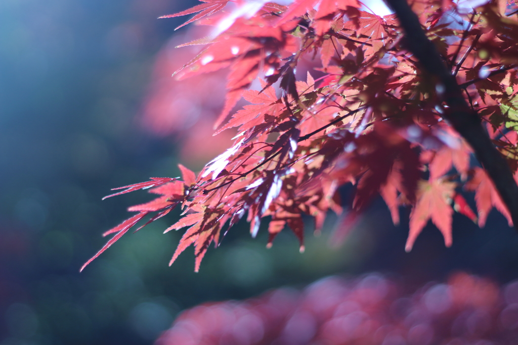 秋陽 ~変化~