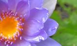 美しい花びら