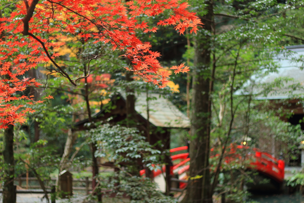 参道の紅葉