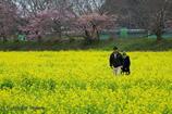一緒に春を歩く
