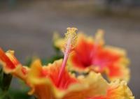 SONY ILCE-7で撮影した(フォーカス)の写真(画像)