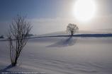雪原に佇む木