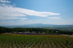 CMのラベンダー畑②