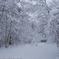 雪のわたぼうし
