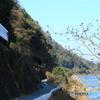 川沿いを走る三江線